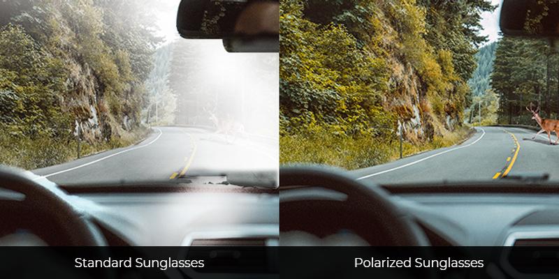 Standard Sunglasses vs Polarized Sunglasses